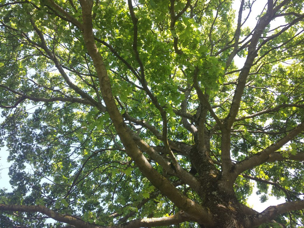 Grünerbaum